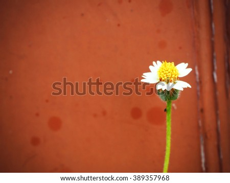 Flower grass on red background - stock photo