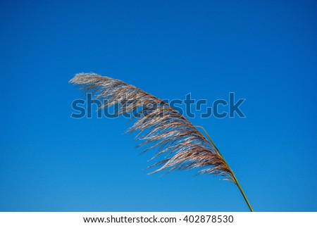 Flower grass under blue sky with clouds. - stock photo