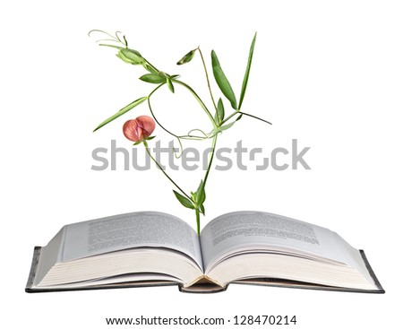 Flower growing from open book - stock photo