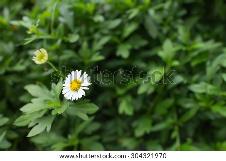 flower growing in the park, green background.  - stock photo