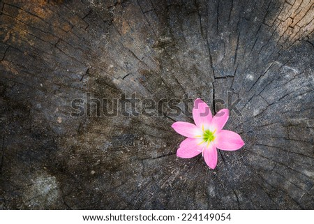 Flower growth up on dead tree as business concept can be successful  - stock photo