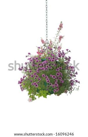 Flower hanging basket isolated on white background - stock photo