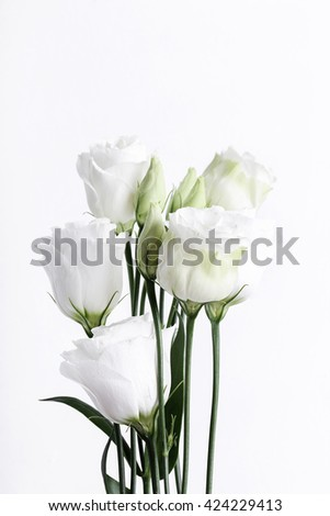 Flower head on a white background