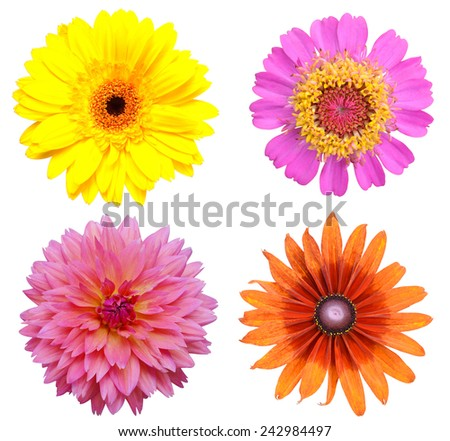 Flower heads isolated on a white background