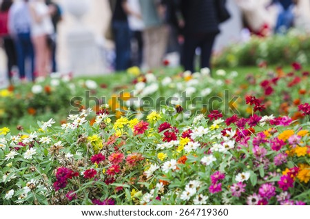 Flower in a garden - stock photo