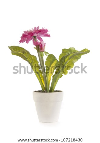 Flower in a white pot isolated on white background