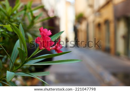 Flower in an old street of ancient Aix en Provence town, South France - stock photo