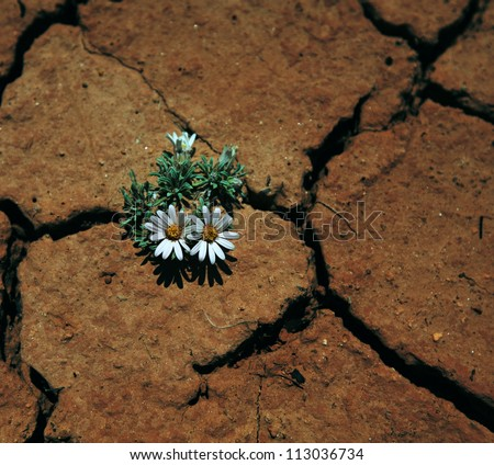 flower in drought land - stock photo