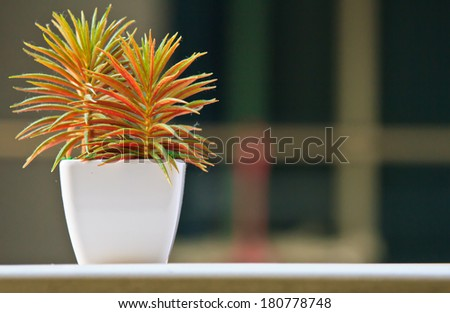 flower in house - stock photo