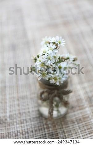 flower in jar - stock photo