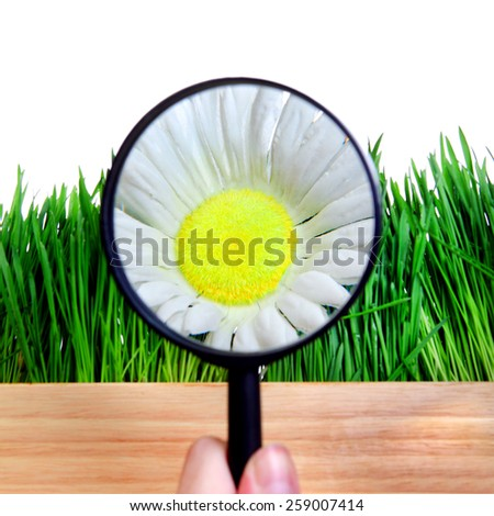 Flower in Magnifying Glass Isolated on the White Background - stock photo