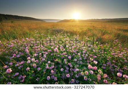 Flower in meadow. Landscape nature composition. - stock photo