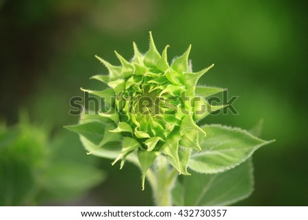 Flower in Park.Selected Focus,Blur Background,Selected Color Tone,High Contrast,Bokeh