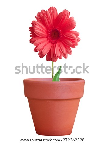 flower in pot isolated on white background - stock photo