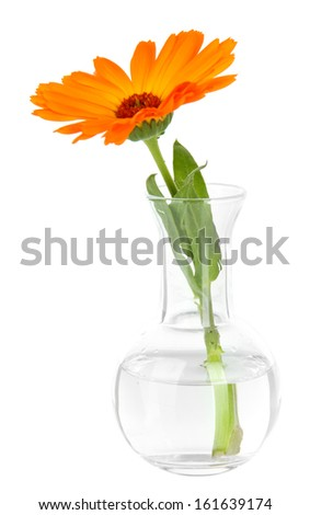 Flower in test-tube isolated on white