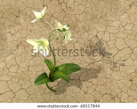 Flower in the desert - stock photo