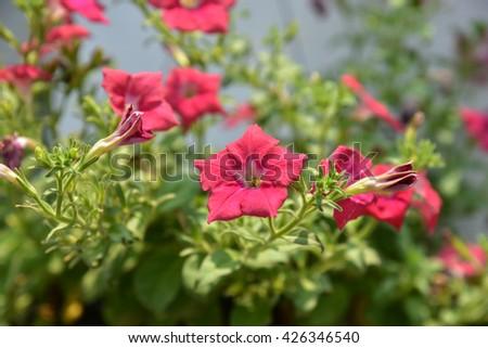 Flower in the garden - stock photo