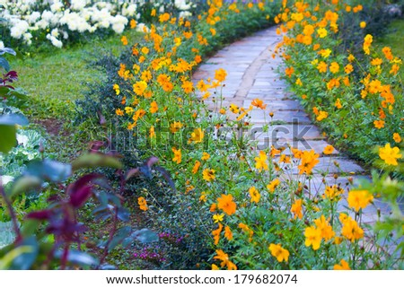 Flower in the garden with stone walkway  - stock photo
