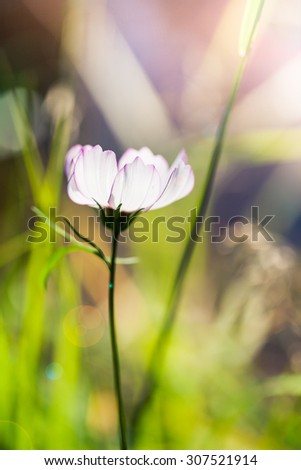Flower in the meadow  - stock photo