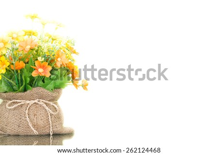 flower in the pot isolated on green background
