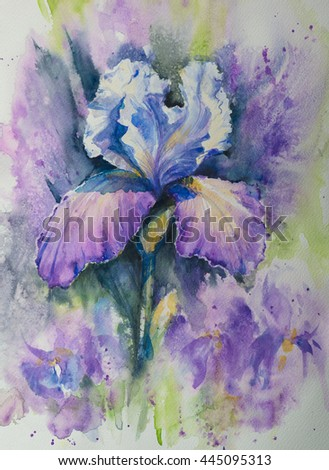 Flower iris with white and pink and white petals . Hand illustration-watercolor on paper.