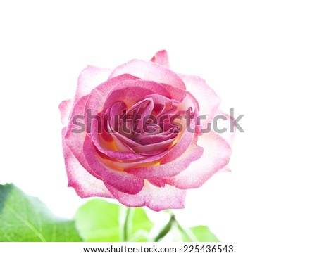 flower isolated white background