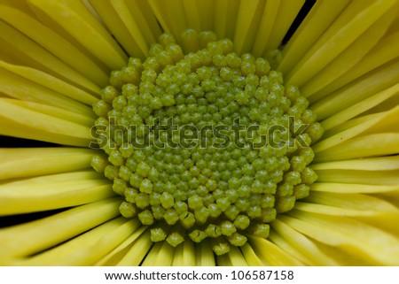 Flower Macro/Close Up - stock photo
