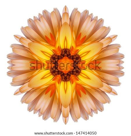 Flower mandala on white background - stock photo