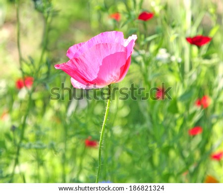 flower meadow  - stock photo