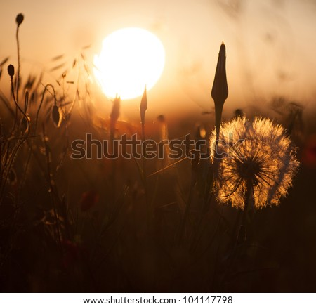 Flower meadow at morning time - stock photo