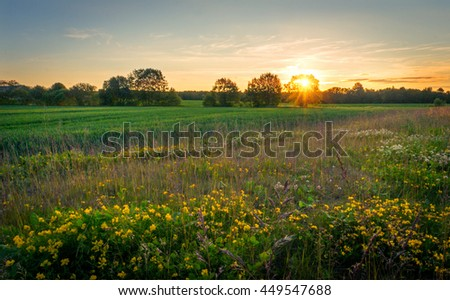 Flower Meadow at Sunset