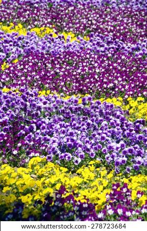 Flower multicolored carpet - stock photo