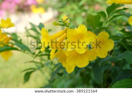 flower nature beautiful  background - stock photo