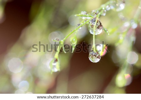 Flower nature blurry background - stock photo