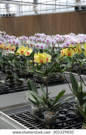 Flower nursery  - stock photo