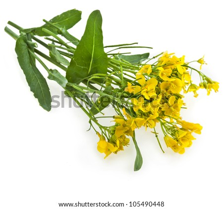 Flower of a rapeseed, Rape blossoms , Brassica napus, isolated  on white background - stock photo