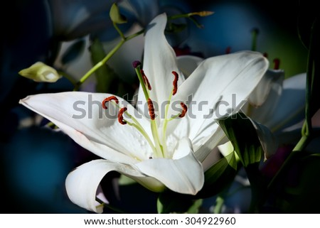 Flower of a white lily in a bouquet - stock photo