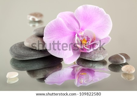 Flower of an orchid with sea pebbles