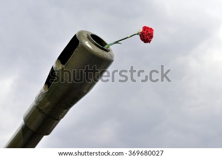Flower of carnation  in  barrel of museum artillery gun on sky background