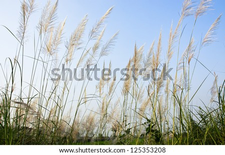 flower of grass - stock photo