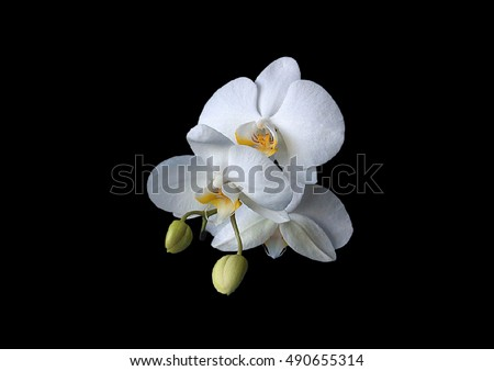 Flower on a white background. Orchid.Black flowers.