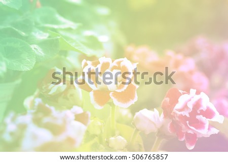 Flower on bright pastel tone.
