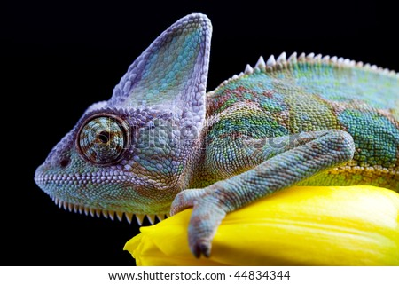 Flower on chameleon - stock photo