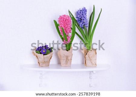 Flower on shelf on white wall background - stock photo