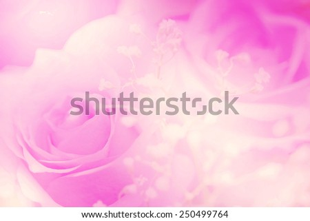 flower on soft pastel color - stock photo