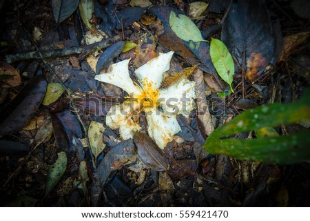 flower on soil in the forest