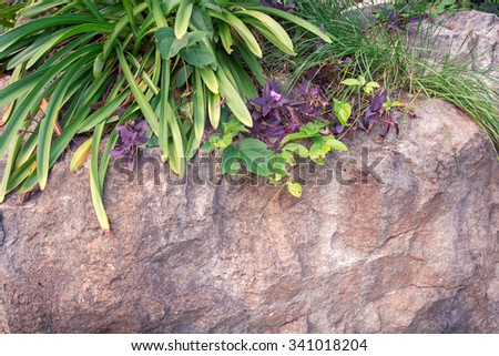 flower on stone background - stock photo