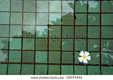Flower on the pool - stock photo