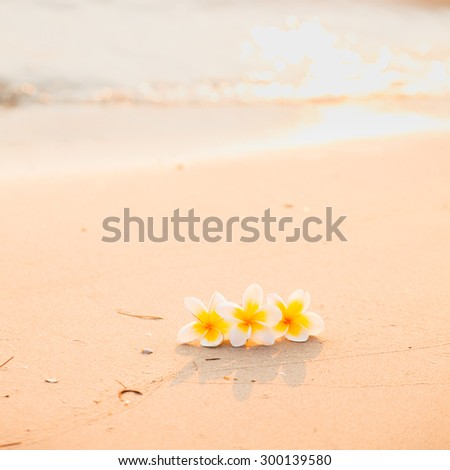 Flower on the sand. White flower on the beach in the morning sunlight shining from behind. - stock photo