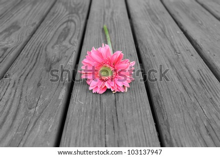 Flower on Wood - Black & White